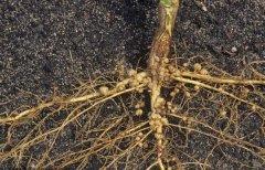 有机肥与化肥的较量,谁才能伴随农业发展继续前行?