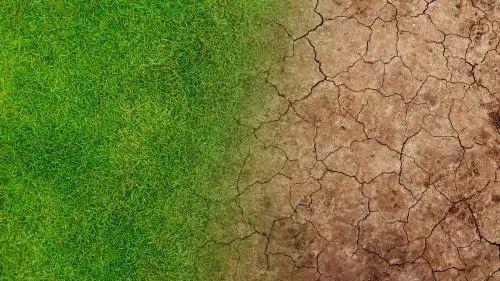 绿进沙退!我国荒漠化土地面积连续十多年持续净减少