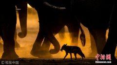 2017年欧洲野生动物摄影师奖揭晓 精彩