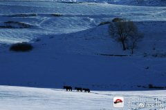 新疆奇台县江不拉克披银装 恰似一幅诗意水墨画