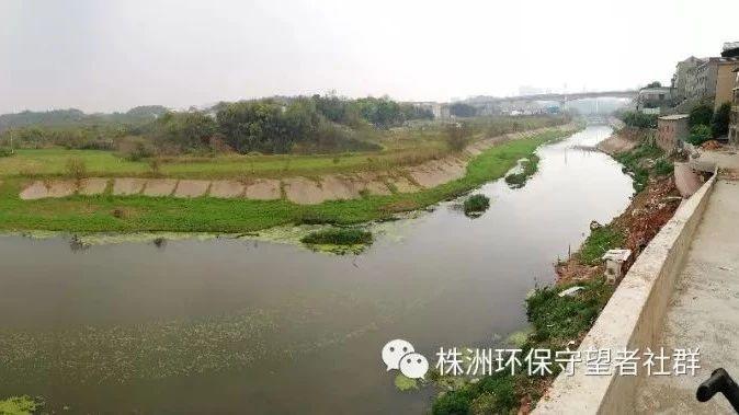 保护龙母河之职教城流域观察