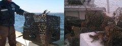 国际间废弃渔具管理与台湾经验的对话