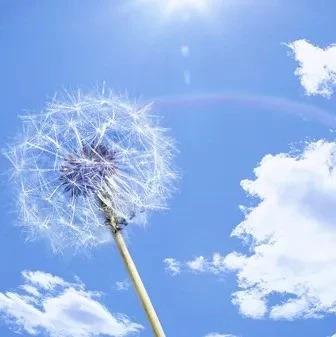 国家能源局发布2020年度风电、光伏发电项目