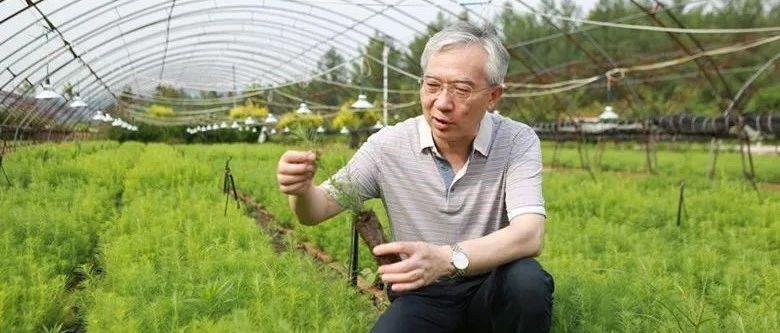 张守攻:创新引领中国人工林培育