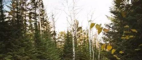 影响造林及农田生态系统固碳效果的因素