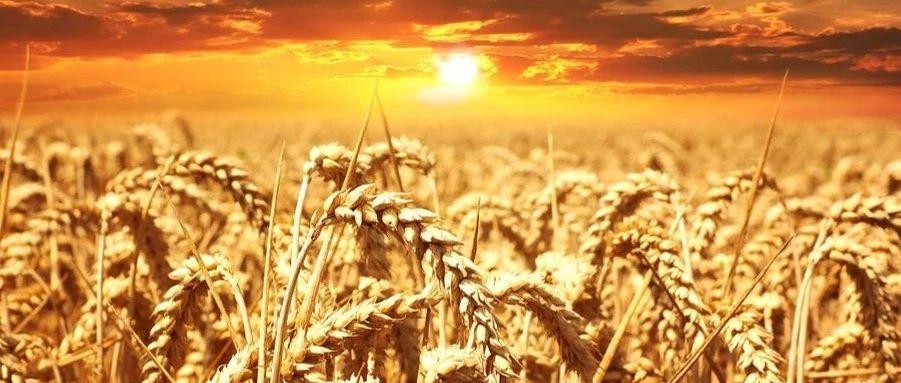 国际资讯_世界粮食不安全现状、影响因素及趋势分析-国际环保在线