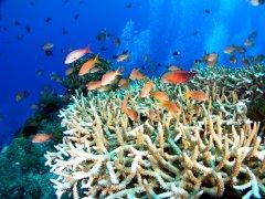 三亚珊瑚礁生态研究所实验室获省级CMA资质