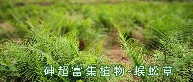 农田重金属污染土壤植物修复技术研究