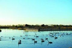 """南大港湿地:完好原生态让候鸟""""定居"""""""