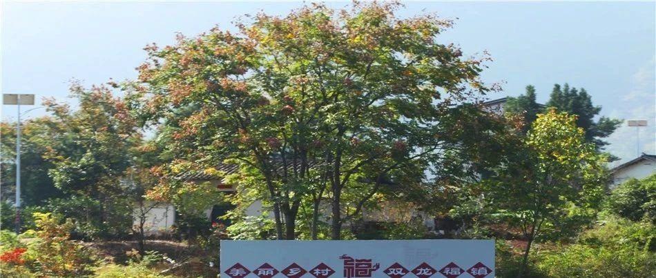 """重庆巫山双龙镇依靠生态文明作支撑建设""""美丽乡村.双龙福镇"""""""
