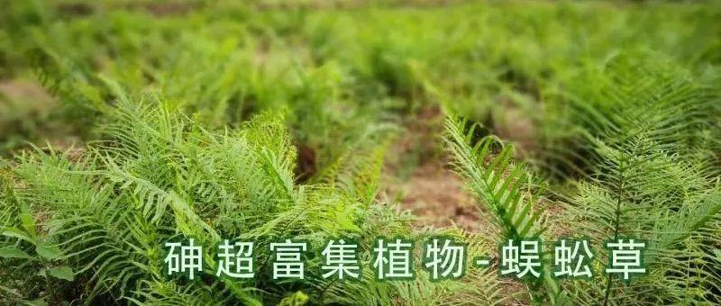 长沙七宝山地区庙冲尾砂库闭库及锰污染综合治理修复效果评估报告