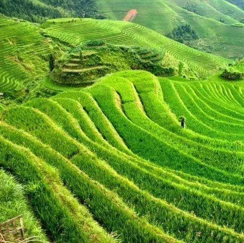 广西林业生态扶贫见闻