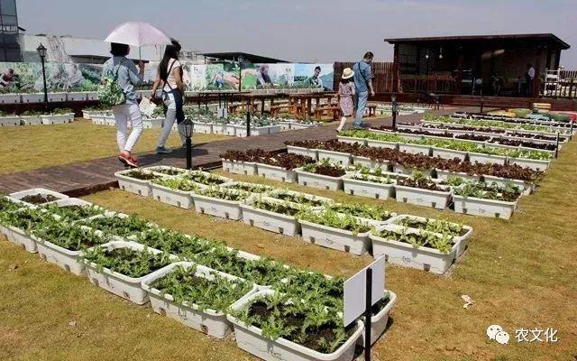 销售奖励的申请_屋顶农场引领绿色建筑新时尚,助力城市绿色发展-国际环保在线