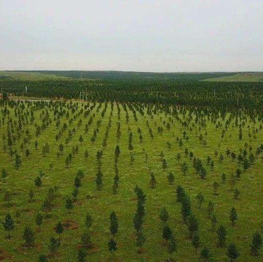 国家林业和草原局表彰三北工程建设40