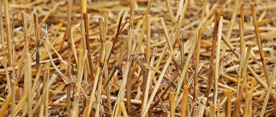 逐年全量秸秆炭化还田对水稻产量和土壤养分的影响