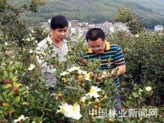 吴约木:带头发展良种油茶的村干部