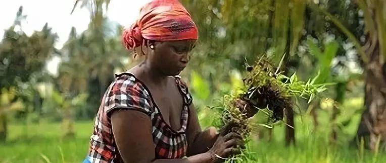 气候智能型农业可推动全球农村可持续