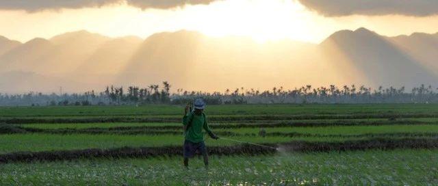 研究人员发现杀虫剂残留正在威胁土壤安全