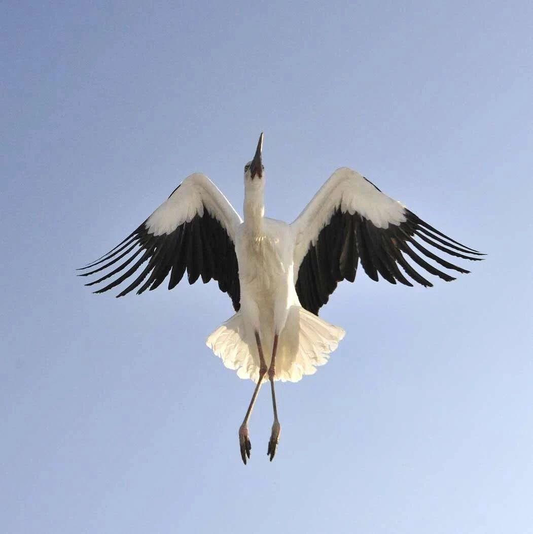 吉林首次跨省放飞野生鸟类