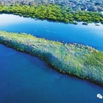自然资源系统全方位推进滨海湿地保护