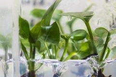 兔子基因改造室内植物 开启空气污染净