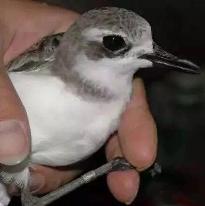投放农药毒杀猎捕珍稀野生鸟类 齐齐哈尔龙沙区检察院