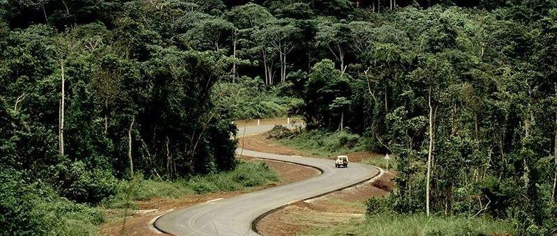 刚果盆地原始森林将化成地图上的马赛