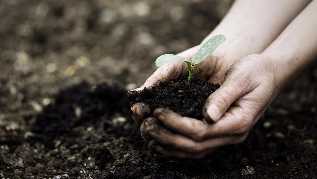 2019年土壤调理剂的春天将要到来!