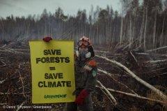 森林火速救兵,拨开气候迷雾
