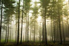 终止森林砍伐 专家:聆听森林声音