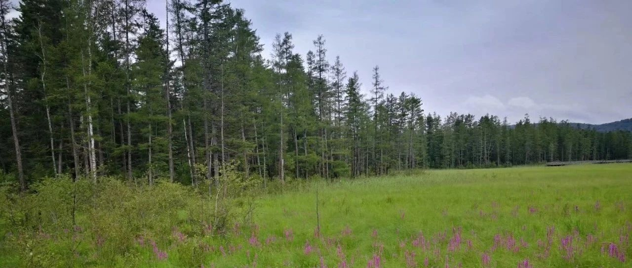 国家林草局:组建重点国有林区森林资
