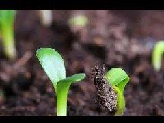 土壤改良不是你想改就能改的!