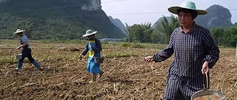 土壤坏了,是人的错?还是肥料的错?