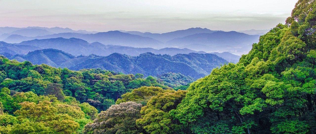 66.80%:福建森林覆盖率连续40年居全