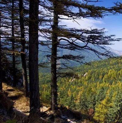 黑龙江省又新增11处国家湿地公园 全省
