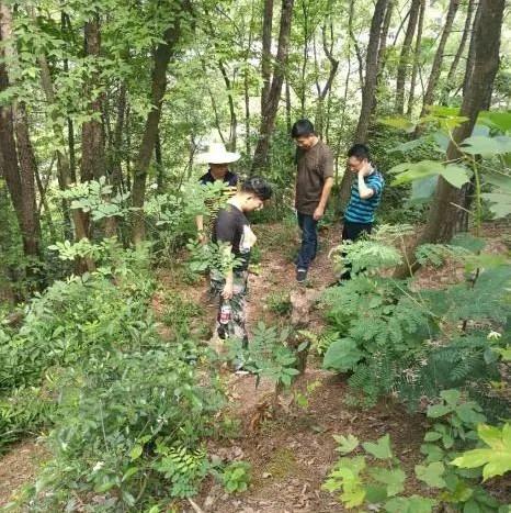 2020年度全国森林资源调查启动