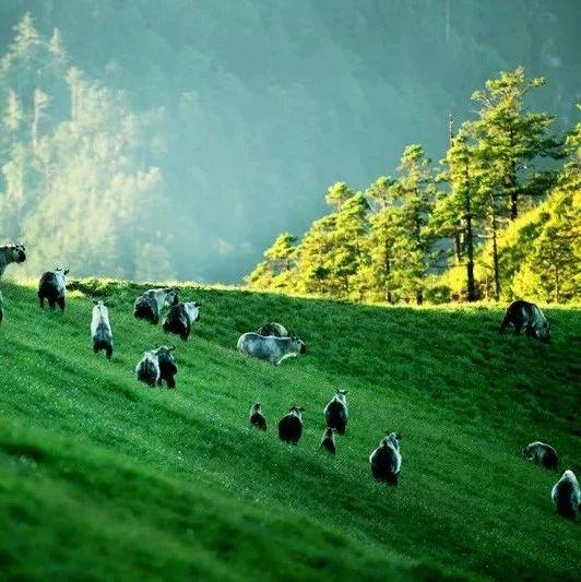 中国特色自然保护地体系建设全面启动