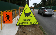 新加坡辟生态旅游区 遭环保人士批本末倒置