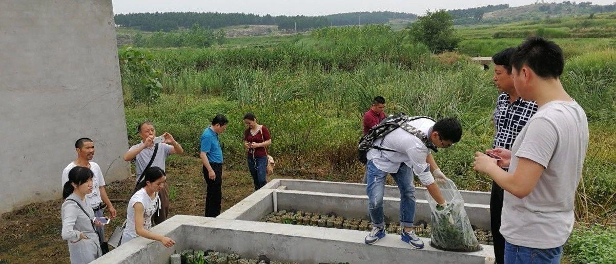 湖北农村面源污染治理模式探索