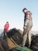 围网养殖少了 洪泽湖水净了