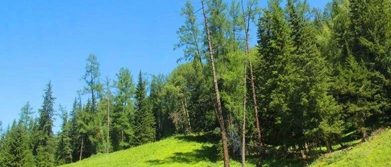 我国不断加大森林资源保护管理力度  各项改革持续推进