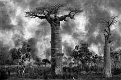 新总统决定马达加斯加森林命运