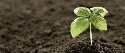 施用生物炭可提升土壤保水能力