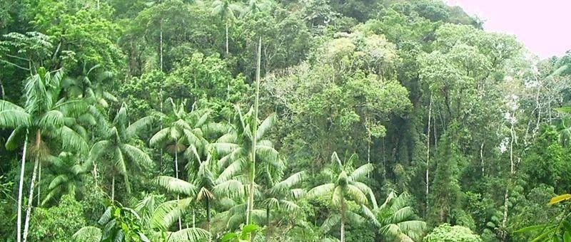 热带雨林的魅力与危机