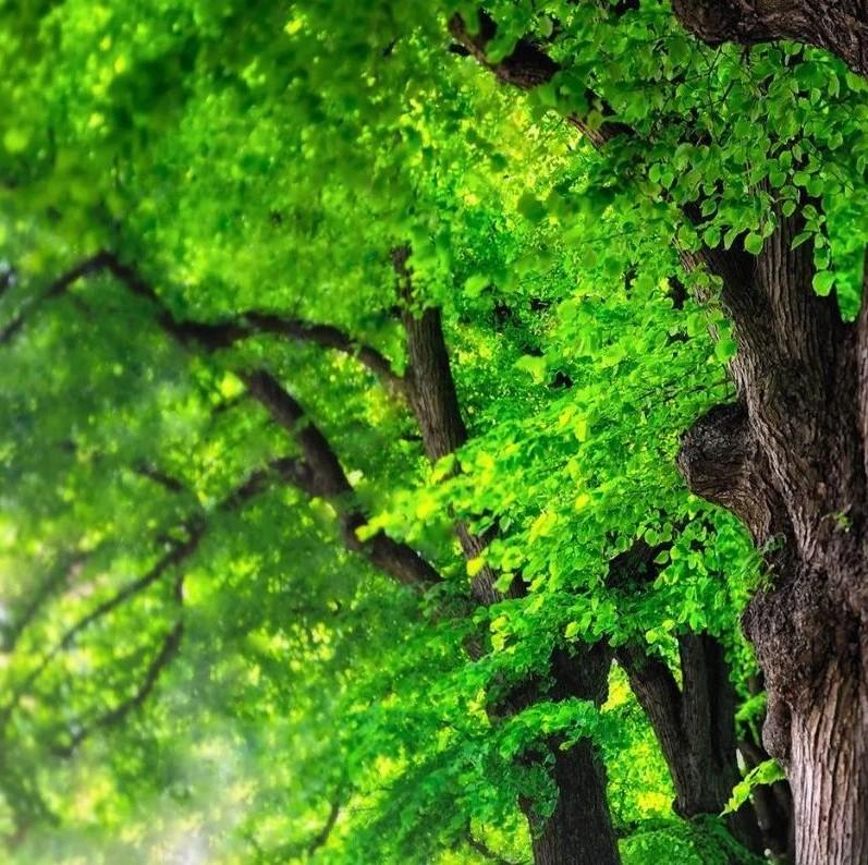 """北京市森林覆盖率已达43.5% 提出""""无界""""森林概念"""