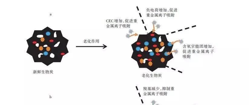 生物炭老化及其对重金属吸附的影响机制