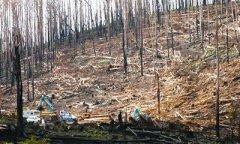 森林土壤需几十年才能从火灾和皆伐中恢复