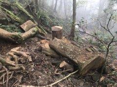 漯河源汇:盗伐树木17棵 被判补种85棵