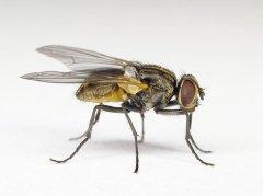 研究:气候暖化增生病媒蝇 恐升食物中毒风险