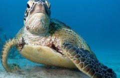 一只海龟的南中国海旅程